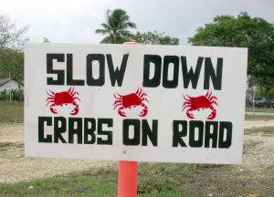 crabs on road